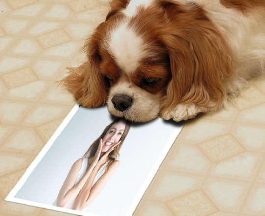 Montagem de Foto - Cachorro